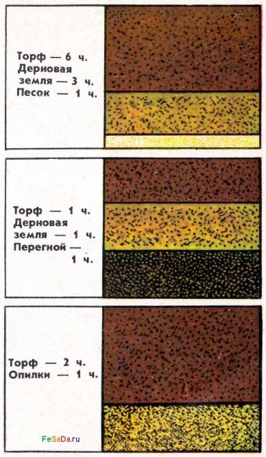 119Состав грунта для клубники