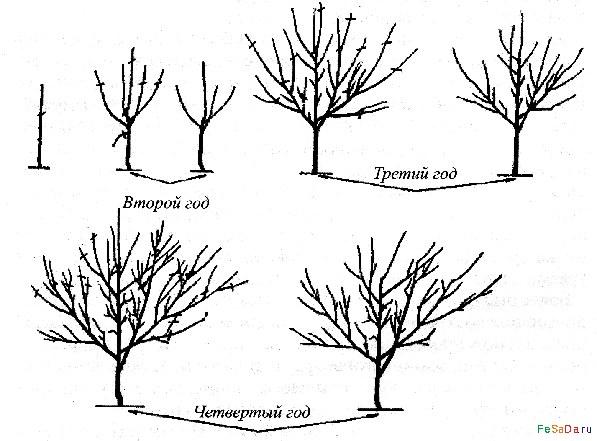 высоту деревьев на уровне