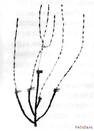 обрезки плодовых деревьев.