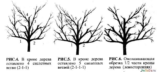 деревья в вашем саду не
